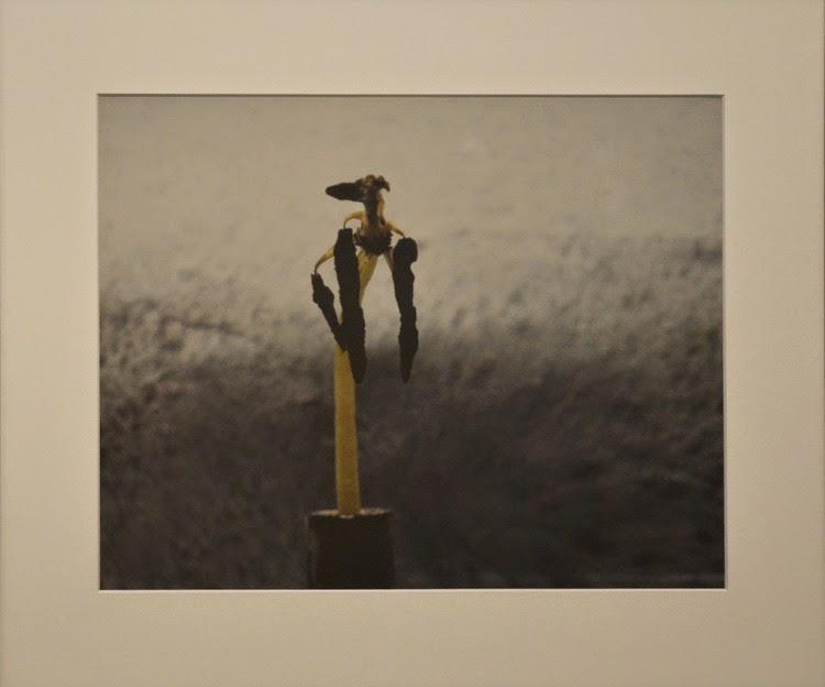 Obra: Yukio Nakagawa, An Alien from the Tulip-Planet | Variaciones sobre el jardín japonés | Stylefeelfree