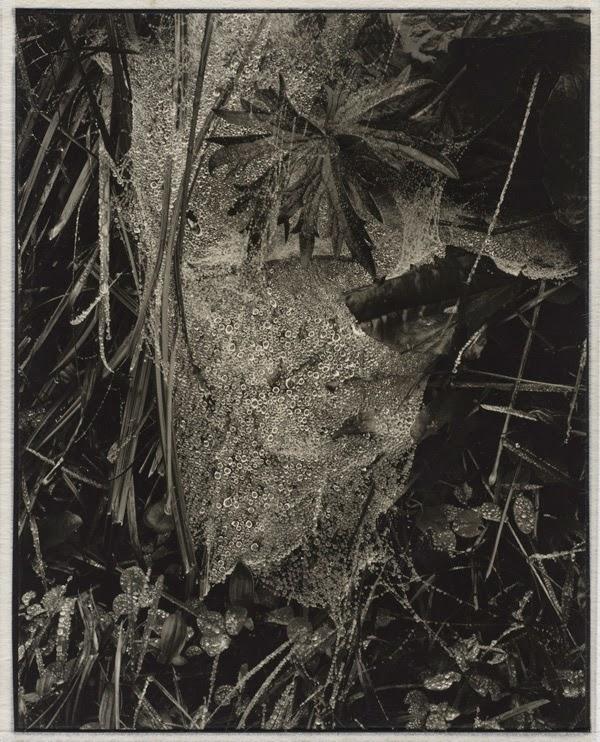 Fotografía | Paul Strand en el museo de arte de filadelfia | Stylefeelfree
