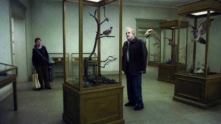 Una paloma se posó en una rama a reflexionar sobre la existencia | Realismo estilizado del absurdo