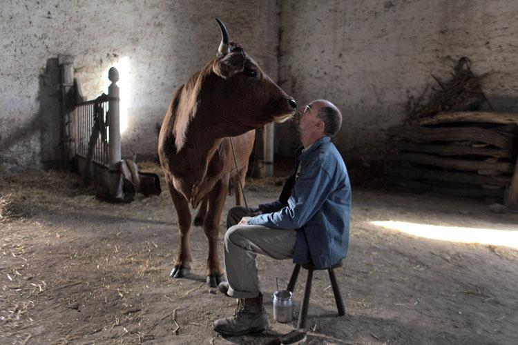 La vaca | Una road movie peculiar