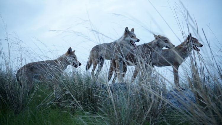 El último lobo | Énfasis en el entorno
