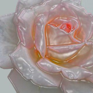 Rosa GA