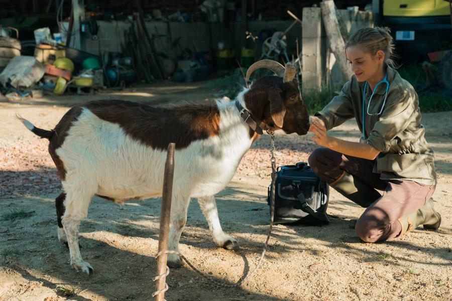 Una veterinaria en la Borgoña   Felicidad personal vs felicidad profesional